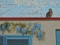 Граффити-кот на Вознесенском спуске