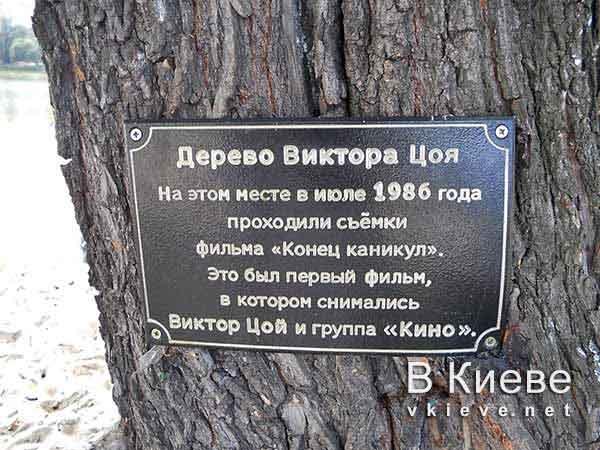 Дерево Виктора Цоя