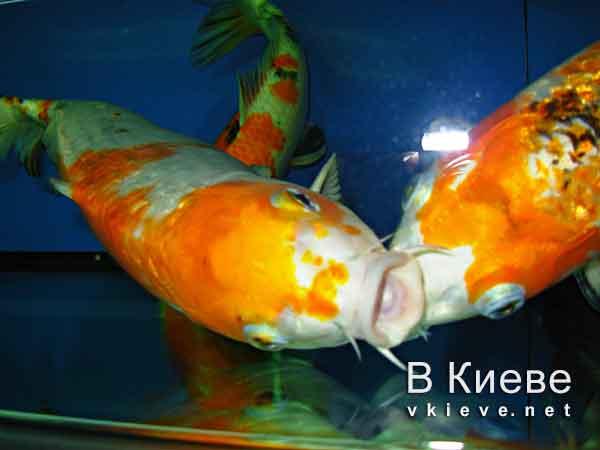 Музей воды в Киеве. Рыбы