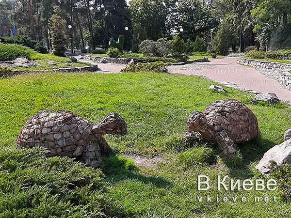 Черепахи в парке Победа в Киеве